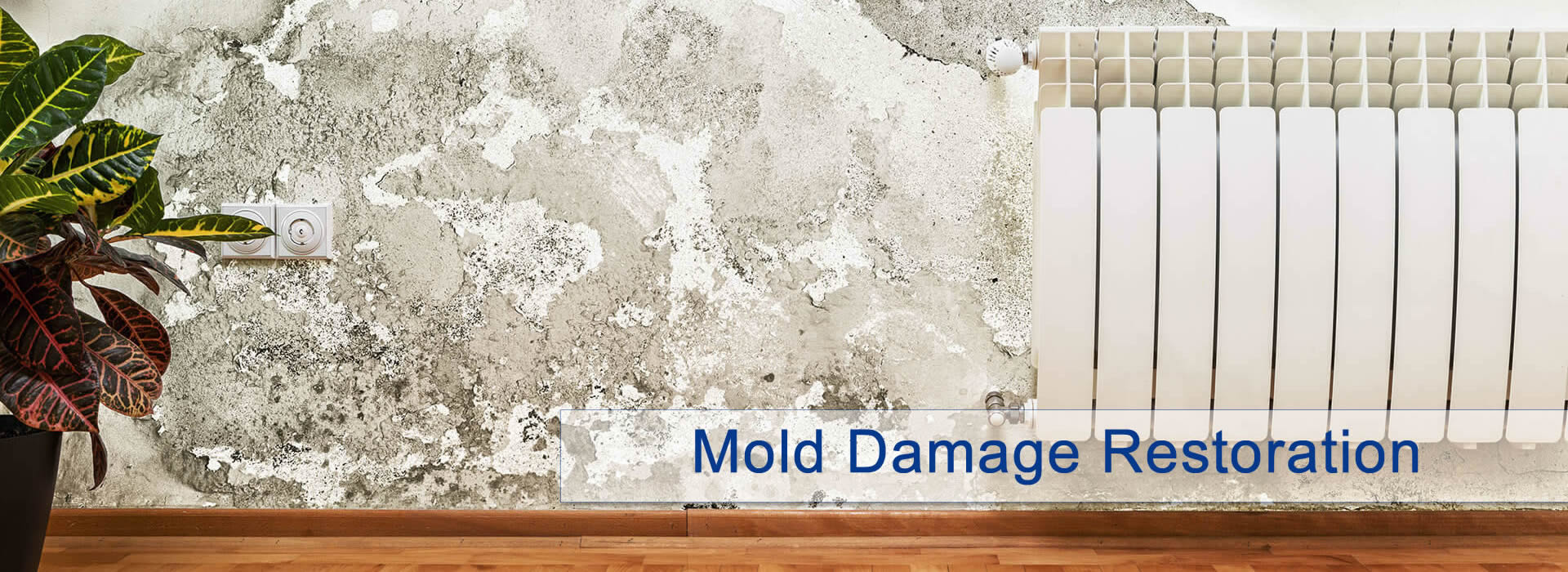 Mold Damage Restoration Dallas / Fort Worth